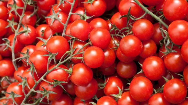 Att jobba med lojalitet är som att jobba med tomater